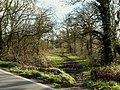 A bridleway known as Green Lane Path - geograph.org.uk - 723347.jpg