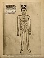 A male nude with the parts of the abdomen and thorax labelle Wellcome V0007731ER.jpg