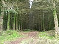 A path through the forest - geograph.org.uk - 1337066.jpg