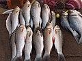 A scene of Hokenakal fish.JPG