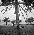Aan de oever van het Meer van Tiberias bij Ein Gev bij harde wind met recreanten, Bestanddeelnr 255-4139.jpg