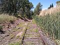 Abandoned Railroad - panoramio (1).jpg