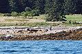 Acadia 2012 08 24 0025 (7958603492).jpg