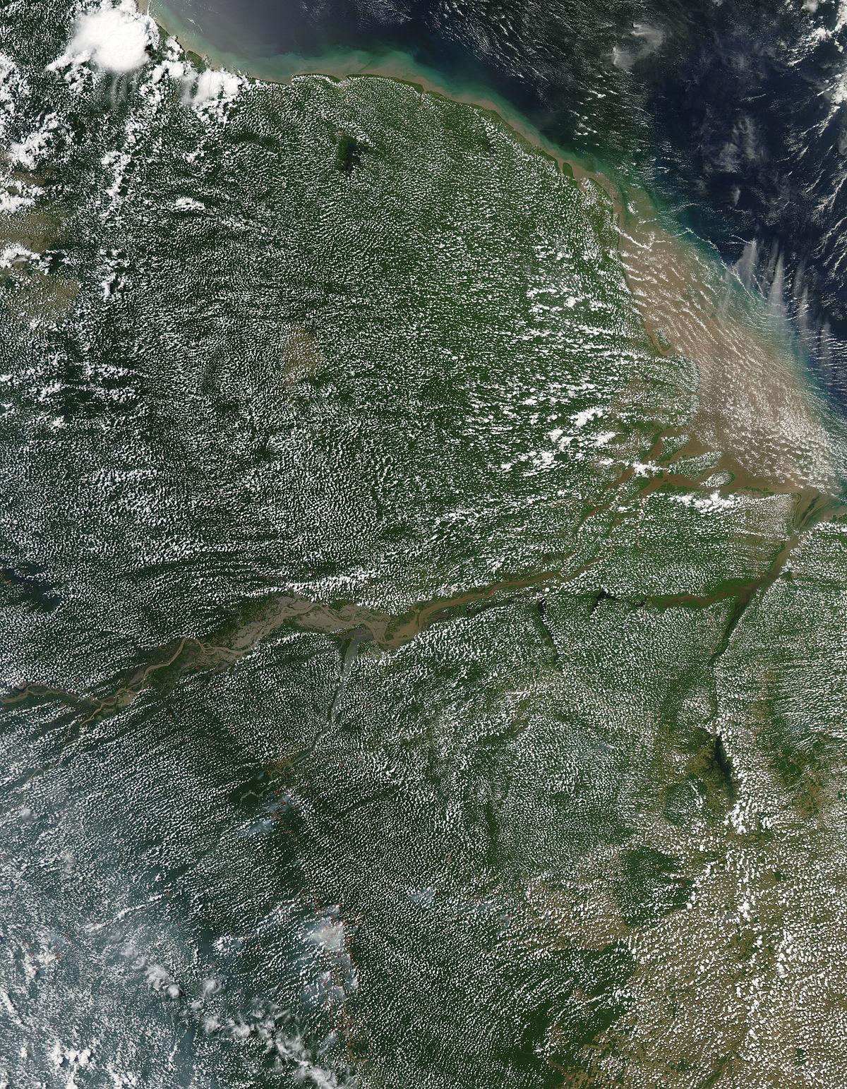 Transpiración vegetal - Wikipedia, la enciclopedia libre
