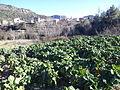 Agricultura a Puebla de Arenoso - 2.jpeg