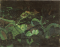 Aimitsu-1942-Insect in Flower Garden.png