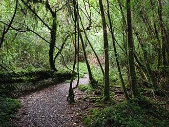 Alerce Andino National Park - Image: Alerce Andino National Park