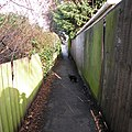 Alley, with alley cat - geograph.org.uk - 1139631.jpg