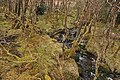 Allt Coire Uainean Beag - geograph.org.uk - 1779814.jpg