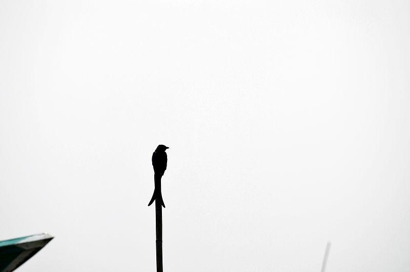 File:Alone Life.JPG