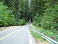 Along Avenue Of The Giants, redwood forest. (10303078475).jpg