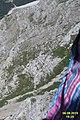Alpine vegetation (Zugs.) (24389223670).jpg