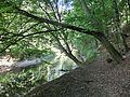 Alter Rotmainwanderweg - panoramio.jpg