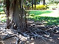 An old tree - Ramat Hanadiv - Rothschild Memorial Park - panoramio.jpg