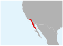 Anaxyrus californicus range map.png