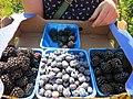 Anika's berries (9423965635).jpg