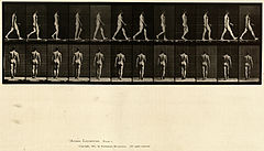 Animal locomotion. Plate 2 (Boston Public Library).jpg