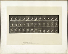 Animal locomotion. Plate 538 (Boston Public Library).jpg