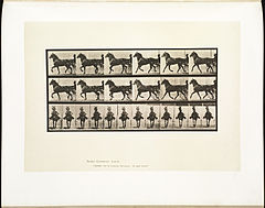 Animal locomotion. Plate 612 (Boston Public Library).jpg