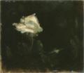 AoyamaKumaji-UnknownDate-A White Rose.png