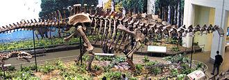 Apatosaurus - Image: Apatosaurus louisae side (Morrison Formation, Upper Jurassic; Carnegie Quarry, Dinosaur National Monument, northeastern Utah, USA)