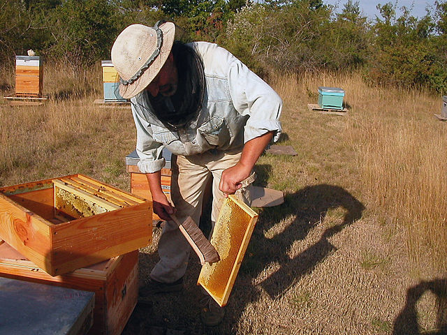 Práca včelára pri úli