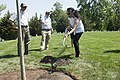 Arlington National Cemetery horticulture department conducts a tree planting ceremony in Section 34 (33940380760).jpg