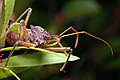 Assassin bug.jpg