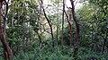 Asurankund Forest - panoramio (5).jpg