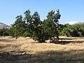 August 2012 - panoramio (49).jpg