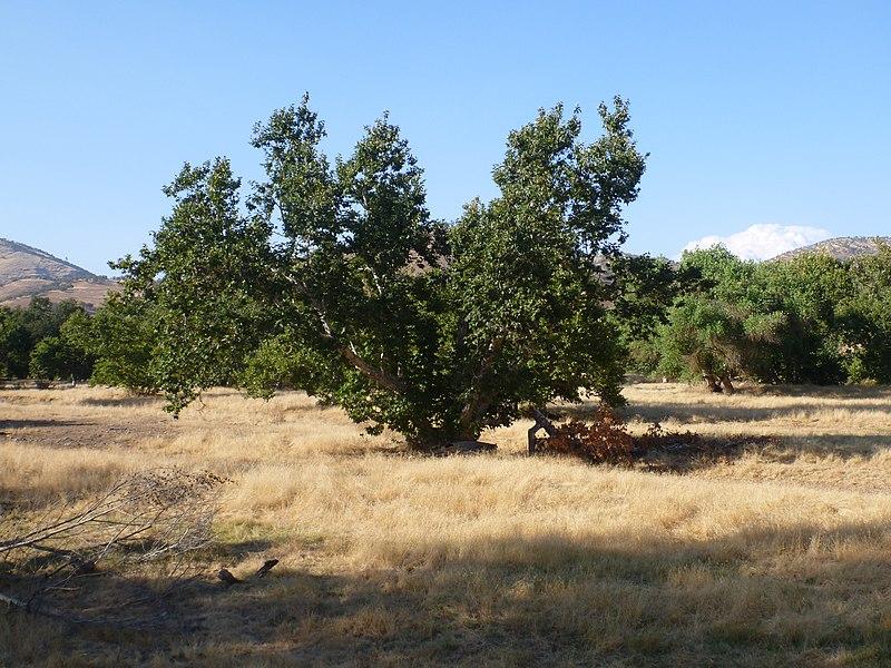 File:August 2012 - panoramio (49).jpg