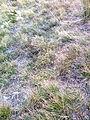 Ausgetrocknetes grass.jpg