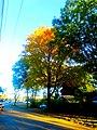 Autumn Colors in Maple Bluff - panoramio (2).jpg