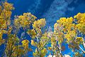 Autumn colours in SW Utah - Hwy 62 in Otter Creek Canyon, Utah (15654765382).jpg