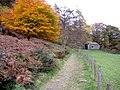 Autumn colours near Crookabeck - geograph.org.uk - 1513133.jpg