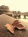 Autunno a Roma.jpg