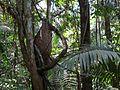Azteca Ant Nest - Flickr - treegrow.jpg