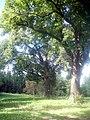 Bäume Jankemühle.JPG