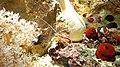 Béziers - Aquarium Polygone 09.jpg