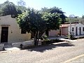 Bachio dos Bernardos - panoramio.jpg