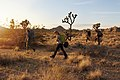 Backpackers at Sunset (30898679221).jpg