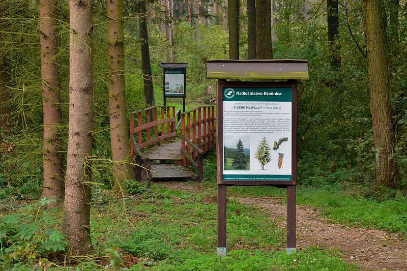 File:Bagienna Dolina Drwęcy, ścieżka dydaktyczna 1.jpg