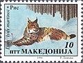 Balkan Lynx (Lynx lynx martinoi).jpg
