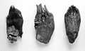 Bear's paws uased in China to ward off colds. Wellcome L0003196.jpg