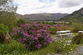 Beara Glenmore Lake Ireland.jpg