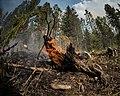 Beaver Creek Fire 2013 Idaho 2.jpg