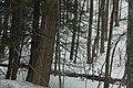 Beaverdale Region - panoramio (9).jpg