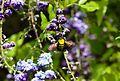 Bee Lake Balboa (20140308-0906).JPG