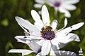 Bee Productive (102681645).jpeg