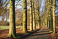 Beech lane Hoge Erf Schaarsbergen near the camping Warnsborn in spring, no cars allowed^ A paradise for walkers and bikers. - panoramio.jpg